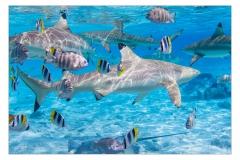 Unter-Wasser-IMG_3256