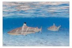 Unter-Wasser-IMG_3294