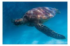 Unter-Wasser-IMG_3390